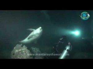 <b>Delfin bittet Taucher um Hilfe</b>