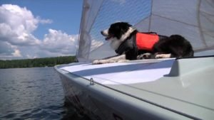 <b>Können Hunde segeln ?</b>