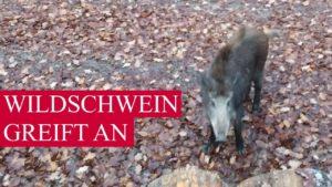 <b>Wildschwein - die tödliche Gefahr beim Wandern, Joggen und Biken</b>