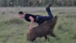 <b>Wildschweinjagd mit Hunden und dem Saufänger (langes Messer)</b>
