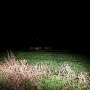 <b>Wildschweinrotten jetzt auch in Porta Westfalica</b>